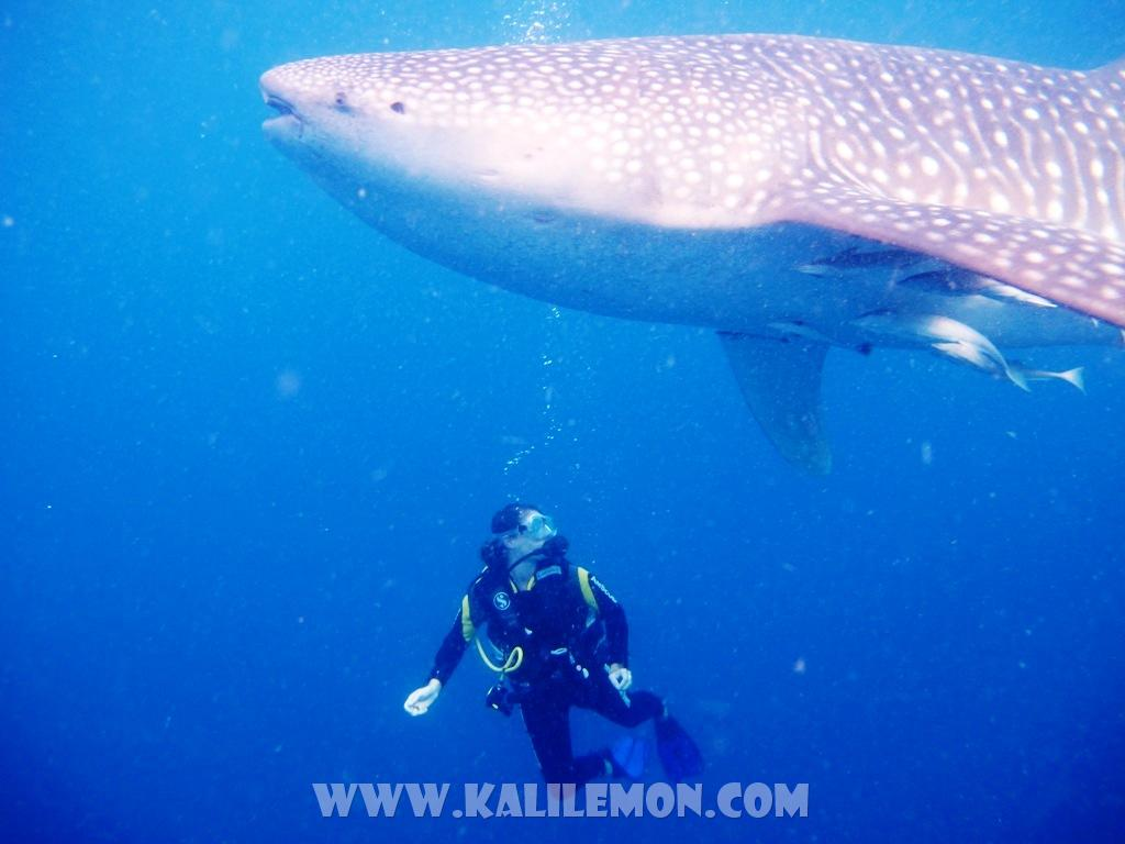 kalilemon Dive And Resort (1)