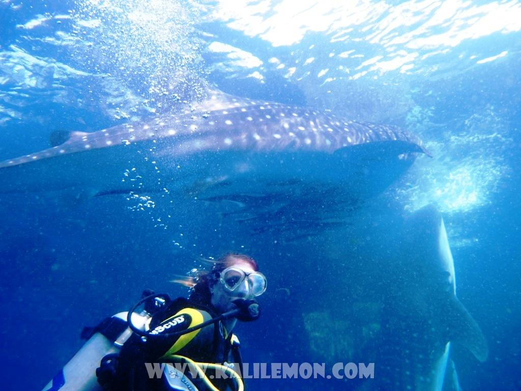 kalilemon Dive And Resort (10)