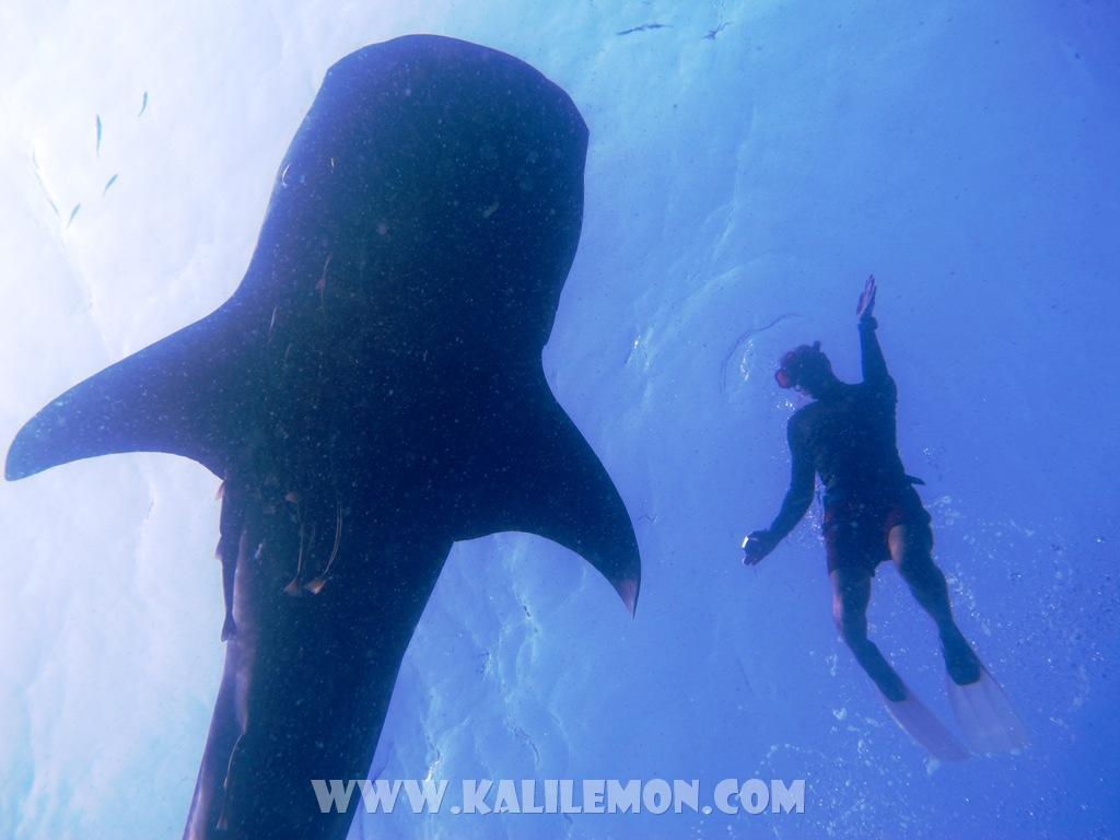 kalilemon Dive And Resort (12)