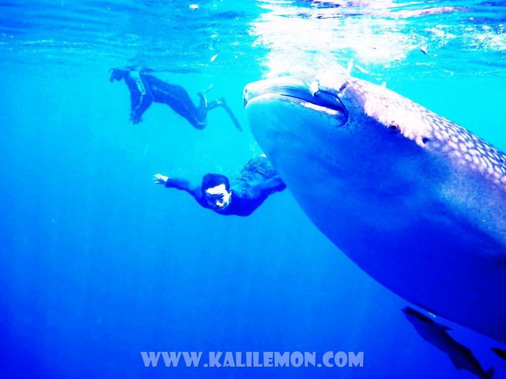 kalilemon Dive And Resort (17)