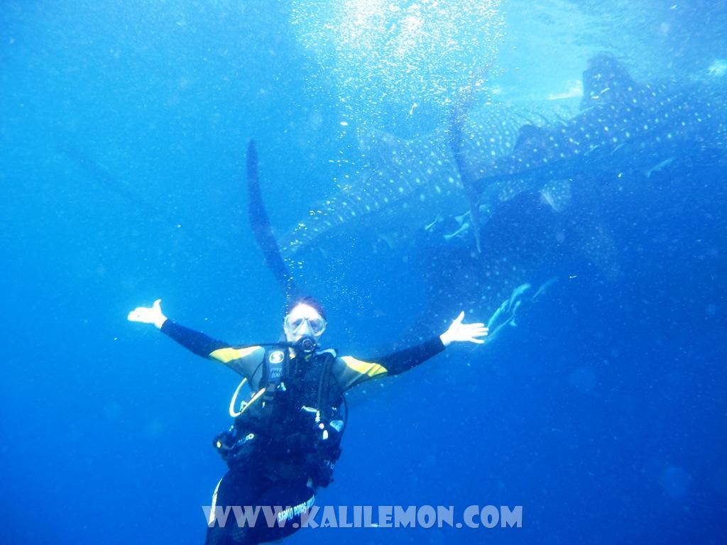 kalilemon Dive And Resort (2)