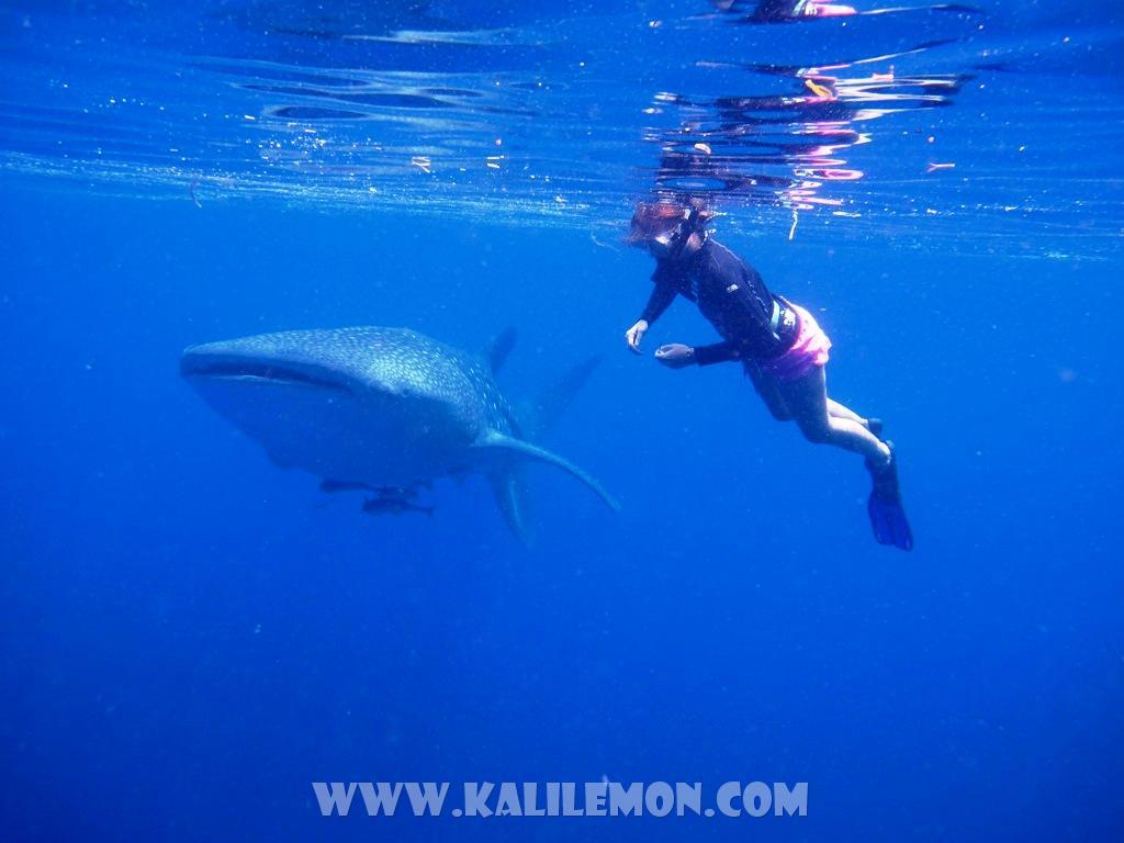 kalilemon Dive And Resort (3)