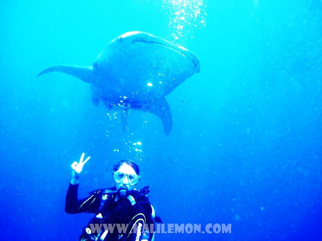 kalilemon Dive And Resort (7)