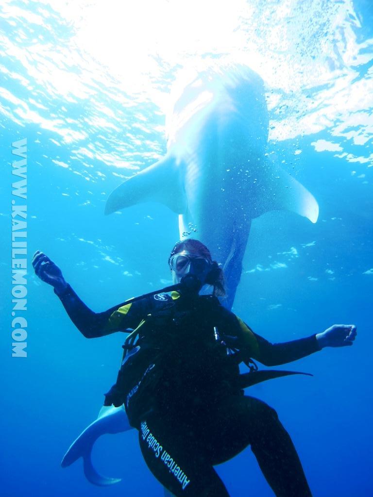 kalilemon Dive And Resort (8)