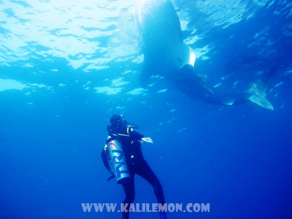 kalilemon Dive And Resort (11)