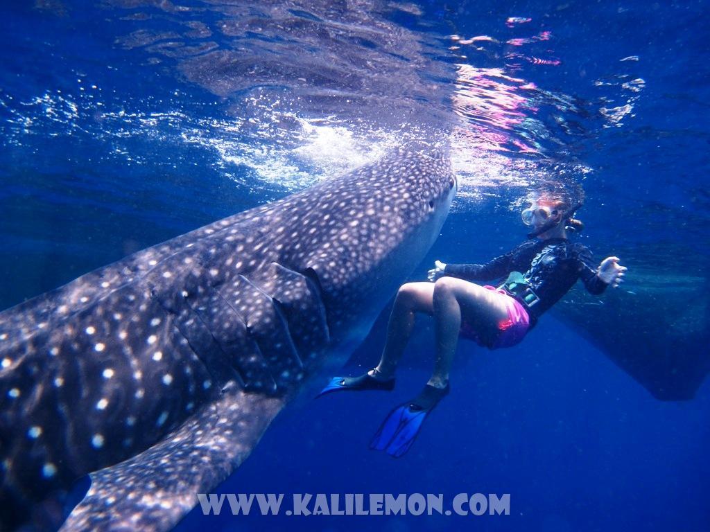 kalilemon Dive And Resort (6)